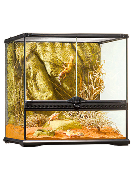 Glass Terrarium Small Wide
