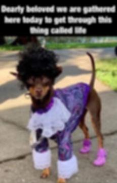 Prince-purple-dog.jpg