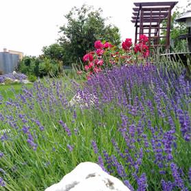 Vidiecky záhrada, Šebastovce