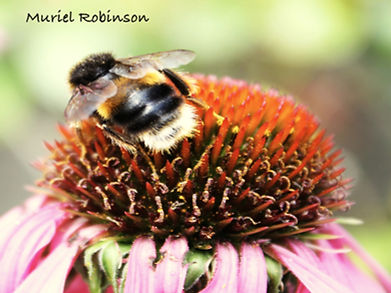 Pollen Collector Named.jpg