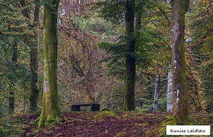 A Seat in the Woods named copy.jpg