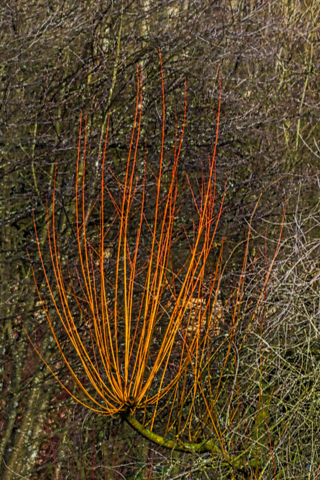 Fiery Rods - E Laidlaw