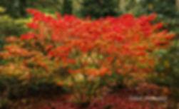 Flaming October named.jpg