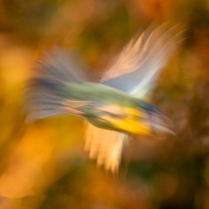Abstract Blue tit