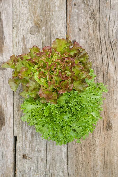Salad Mix (2) (12 oz)