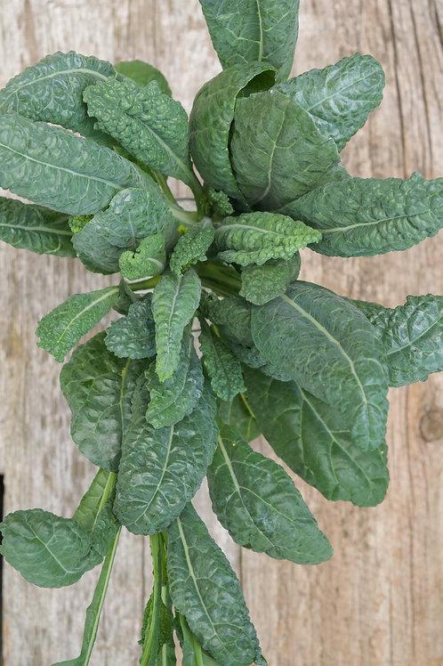 Dino Kale (6 oz)