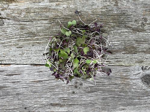 Purple Radish Microgreens (2 oz)