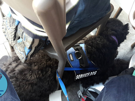 What is a Service Dog and What rights do their Handlers have in the United States?