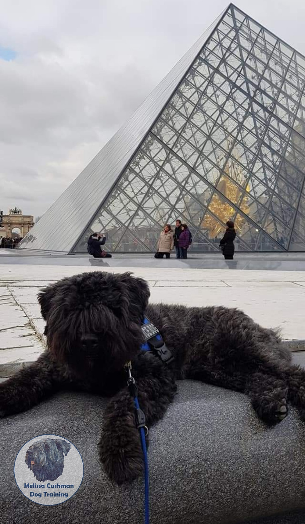 Gunther a Bouvier Des Flandres Gluten Detection Service Dog laying down in front of the Louvre in Paris, France
