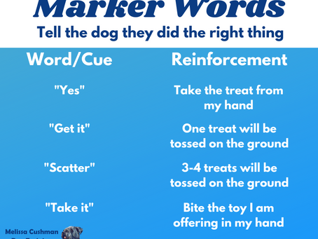 What is a Marker Word and How do you Train it?