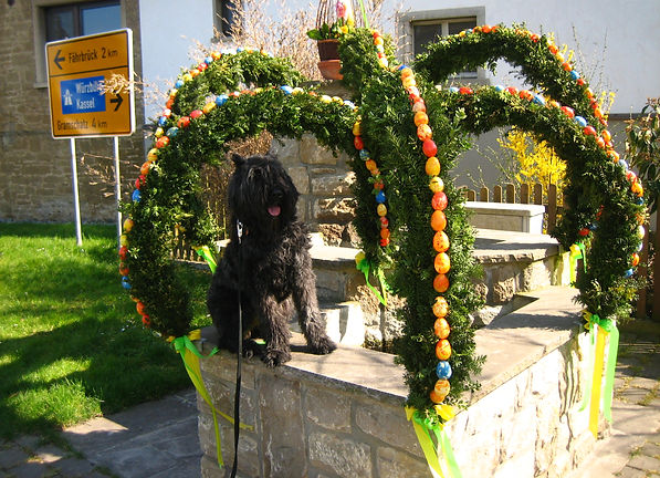 Jezabelle a Bouvier Des Flandres sitting on a fountain with Easter Decorations located in Hausen bei Wurzburg, Germany