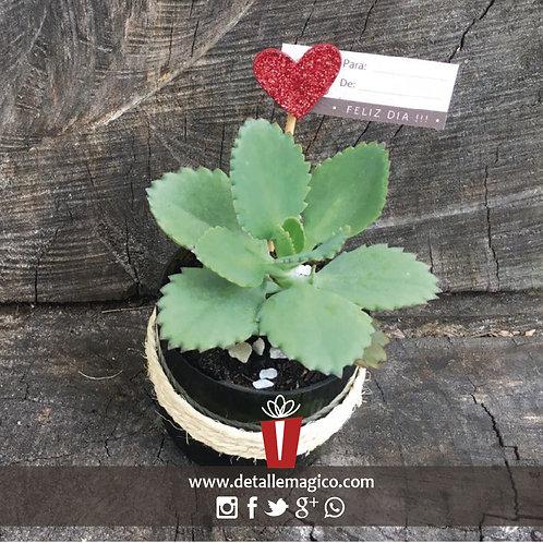 Suculentas, regalo vivo, plantas, viveros Colombia, Suculentas, Cali, regalos, parejas, regalos amistad, Detalle Magico