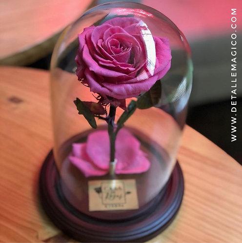 Flores | Rosas Preservadas - Cúpula en Cristal | Detalle Mágico , Regalos Colombia