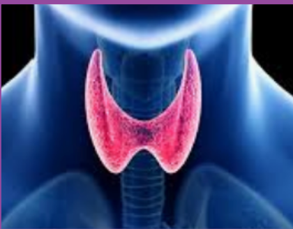 How to adequately test your Thyroid Function