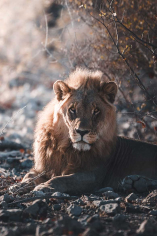 objetivverleih-safari-03jpg.jpg