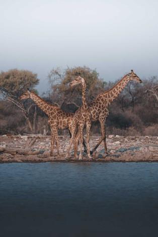 objetivverleih-safari-02.jpg