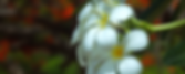 exotic flower