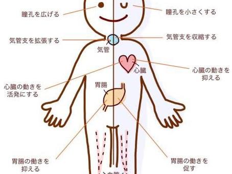 熊谷 MAKE A BODY 自律神経と身体のお得情報