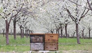 almond field.jpg