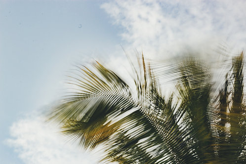 DANCING PALMS COLOR