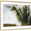 Thumbnail: DANCING PALMS COLOR