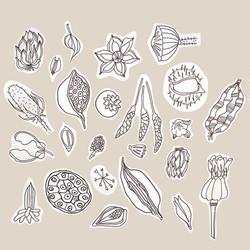 seeds_edited.jpg