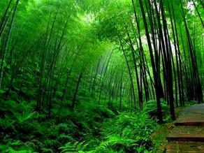 Conte oriental du bambou et de la fougère