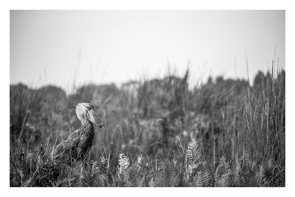 Amongst the Reeds