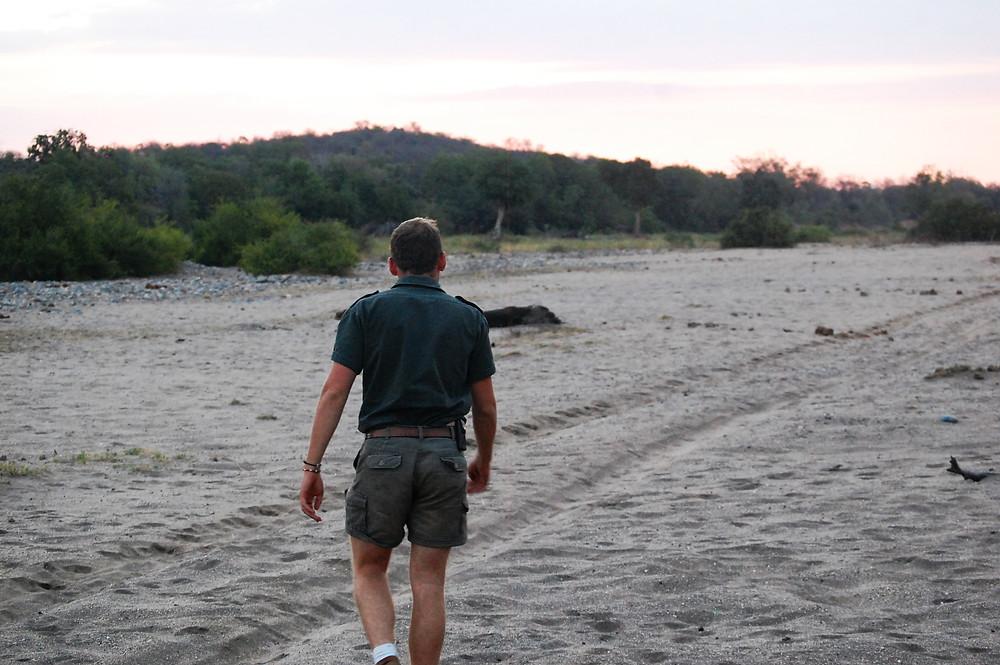 Safari guide walking