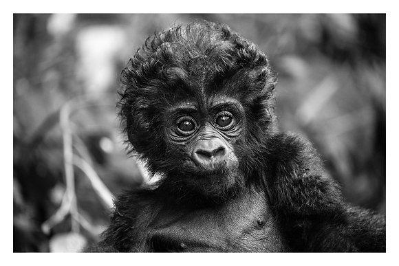 Baby of Bwindi