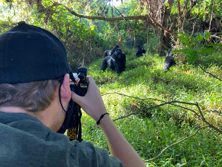Into The Wild: Vol.1 Gorillas