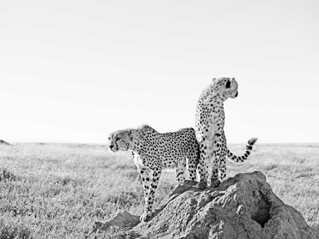 Story Behind The Photo: Serengeti Siblings