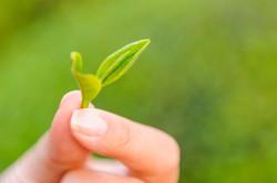 Green Tea exporters