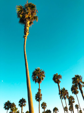 Palm Trees At Mission Beach-StudioSisson