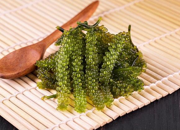 Umibudo (Sea Grapes)