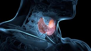 Thyroid.