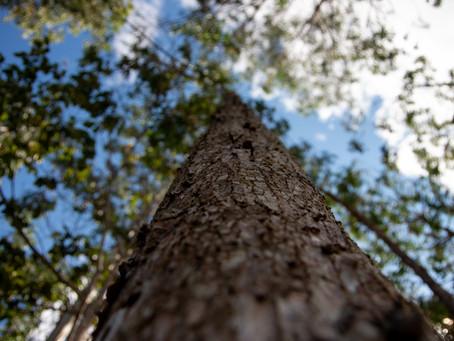 Consultoría en desarrollo de la cadena de valor para especies forestales maderables