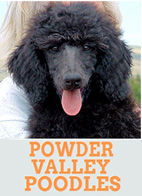 Powder Valley Poodles