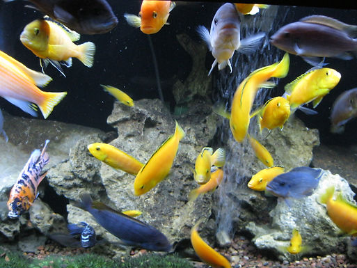 Aquarium Maintenance fish tank Cleaning Service