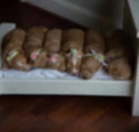 Summer2019BonessoPuppies-2.jpg