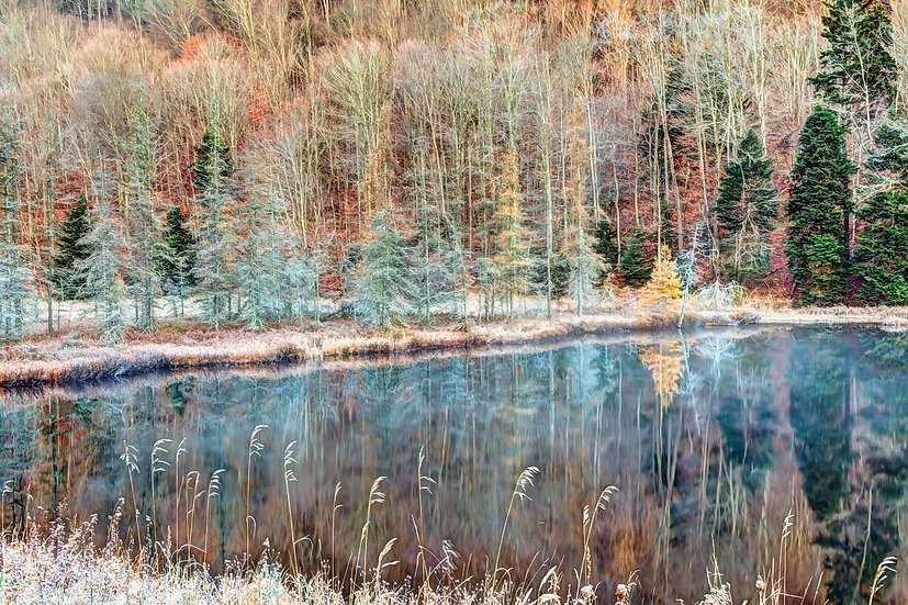 Icy Morning at Bald Mountain Pond