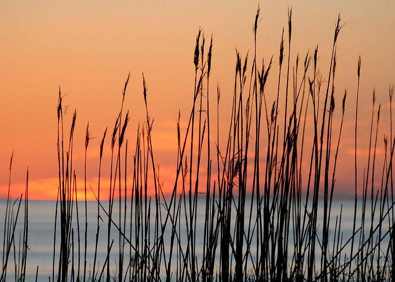 Coast Guard Beach Sunrise I