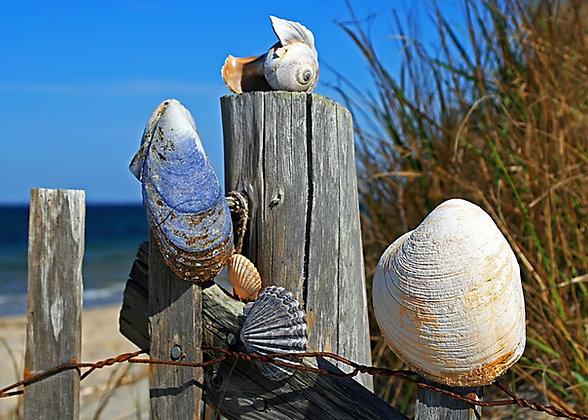 Bay Beach Shells