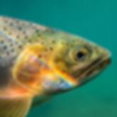 Fish04_square.jpg