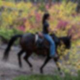 horse02_square.jpg