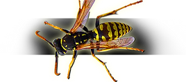 Groton Pest Control, Groton, MA USA