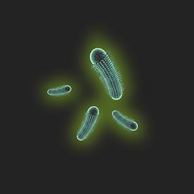 Germe-3.png