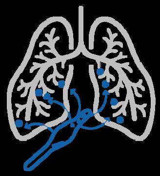Pulmobiotics_pulmon.png
