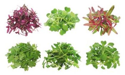 Microgreen-Piles.jpg