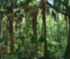 FLHikesbottomland2.jpg